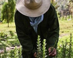 person-farming