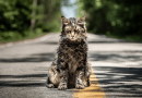 Pet Sematary – A Movie Review