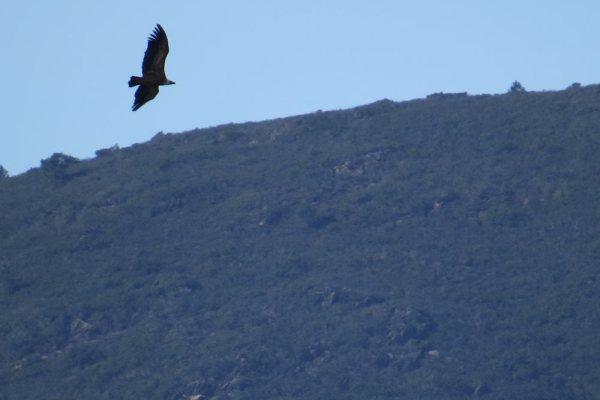 Aves en Extremadura