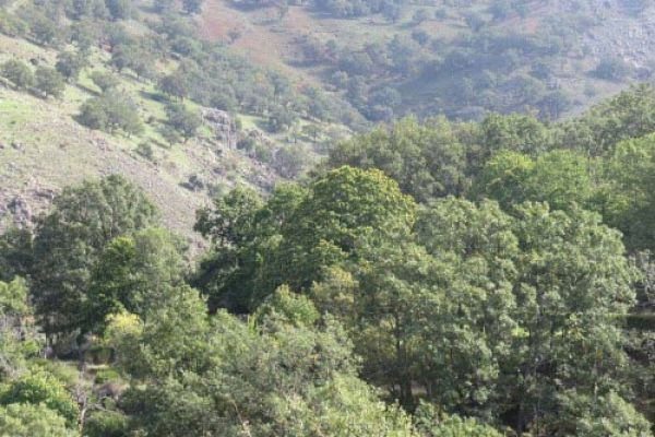 Bosques del Ambroz