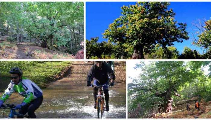 bosques de ourense en bici