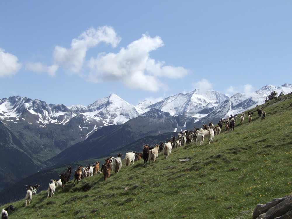 Trekking por el Valle de Tena