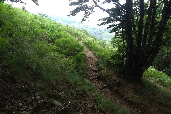 Inicio de la senda saliendo del bosque