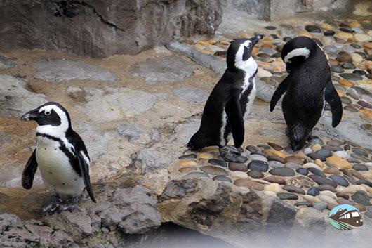 Mini zoo de Santander