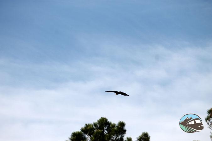 Avistamiento de aves - Valle de Alcudia