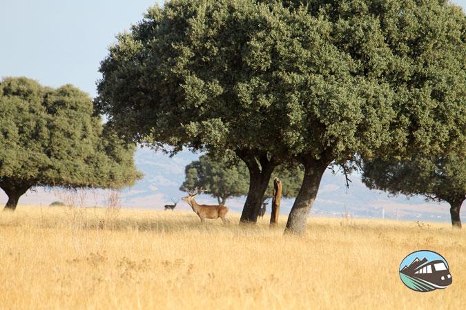 Cabañeros el Serengueti español