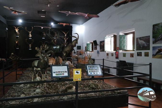 Museo de la caza Torre del Vinagre - Sierra de Cazorla