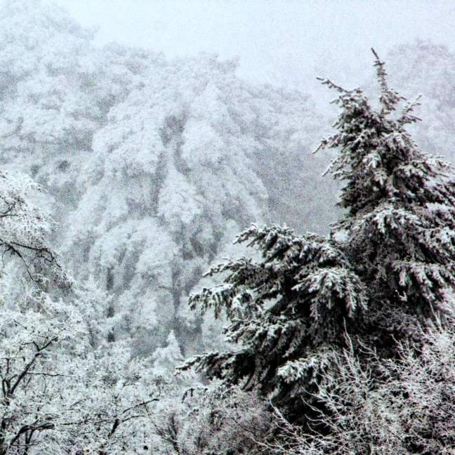 Winter-001