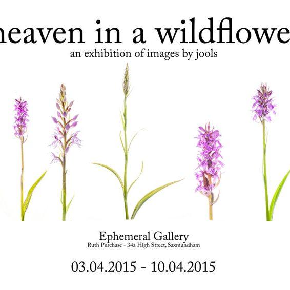 Heaven in a Wildflower – Endure