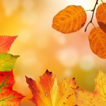 How to stay positive and avoid feeling low in Autumn