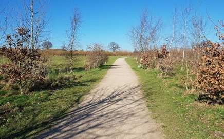 heartwood forest