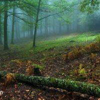 21 de marzo. Día Internacional de los Bosques