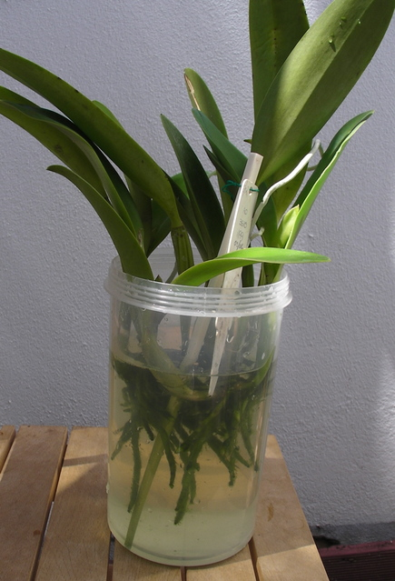 Orchid Plants Sale Kerala