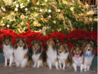 Fido's Night Out at Lewis Ginter