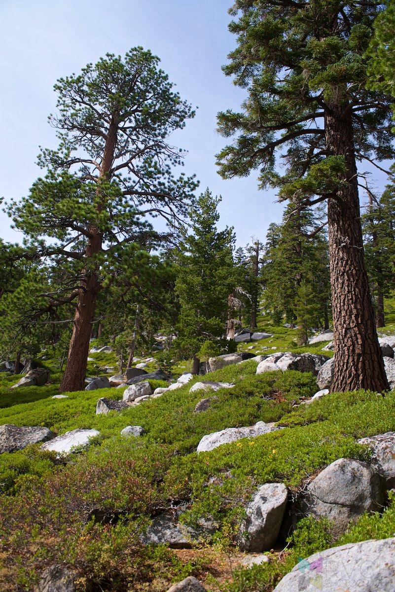 Lake-Tahoe-RCH_0359