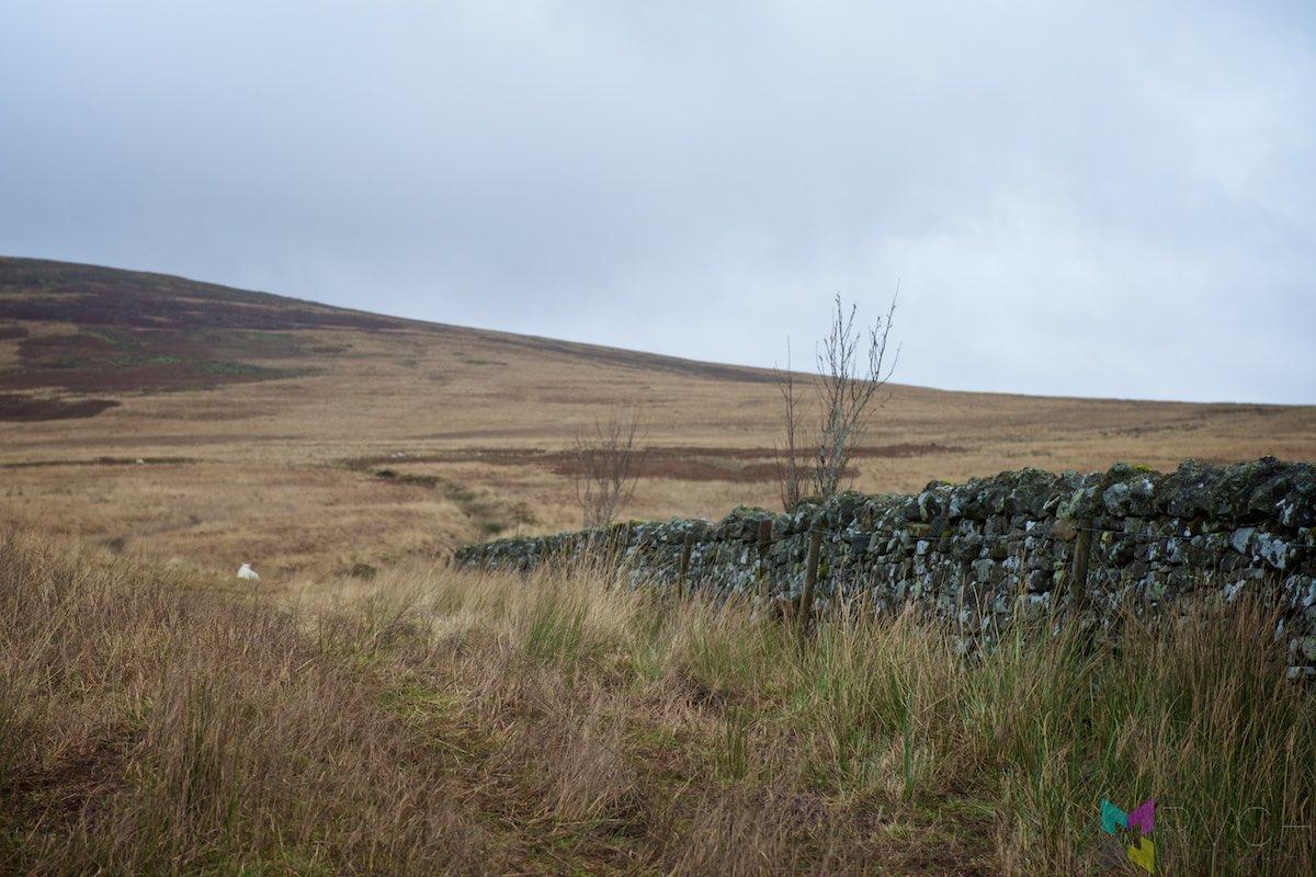 Scottish-Border-Region-RCH_1316