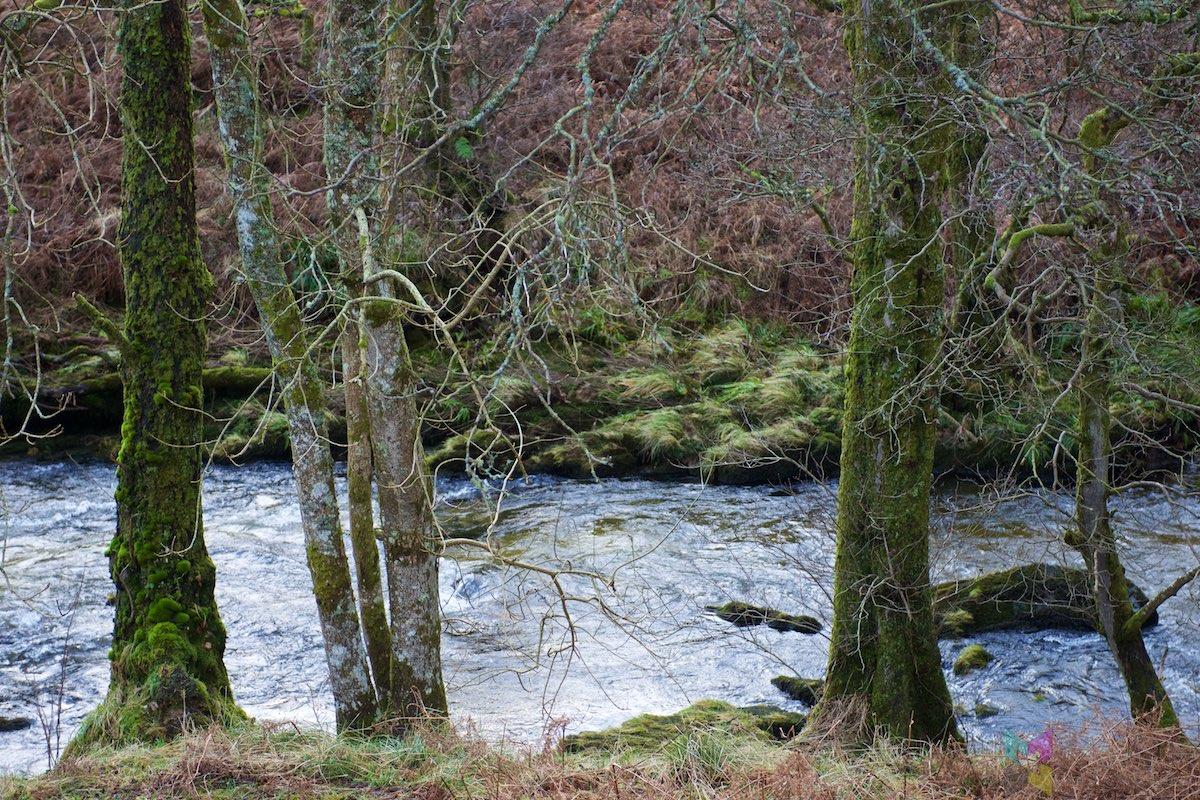 Scottish-Border-Region-RCH_1323
