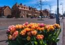 Tulp Festival brengt saluut aan Amsterdammers