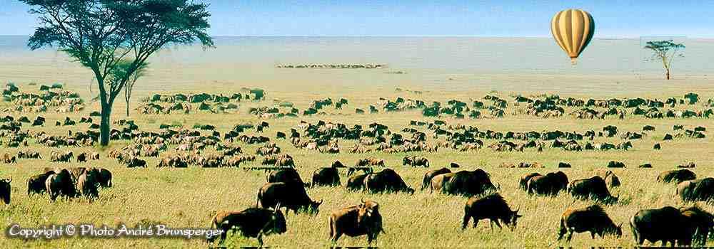 Plaines du Serengeti avec migration et Montgolfière - Nos safaris en Tanzanie