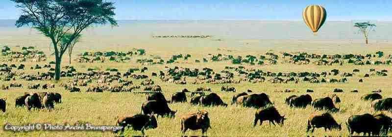 carte du parc national du Serengeti - nos safaris en Tanzanie