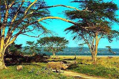 Rhinocéros au lac Nakuru. Nos safaris au Kenya