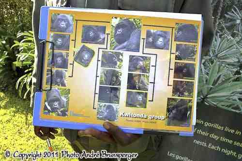 famille de Gorilles - Safari 4 jours Gorilles lac Kivu