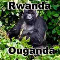 Safari Rwanda Ouganda safaris Gorilles des montagnes