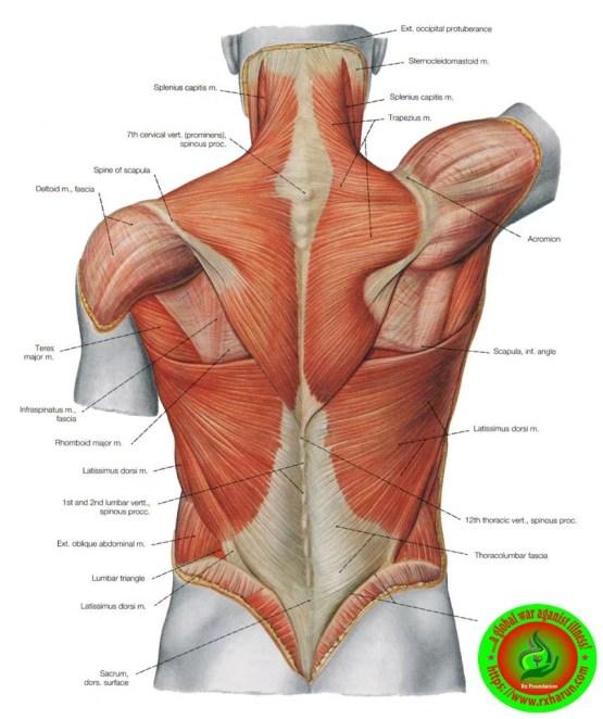 Sciatica, Sciatica – Types, Causes, Symptoms, Diagnosis, Treatment,