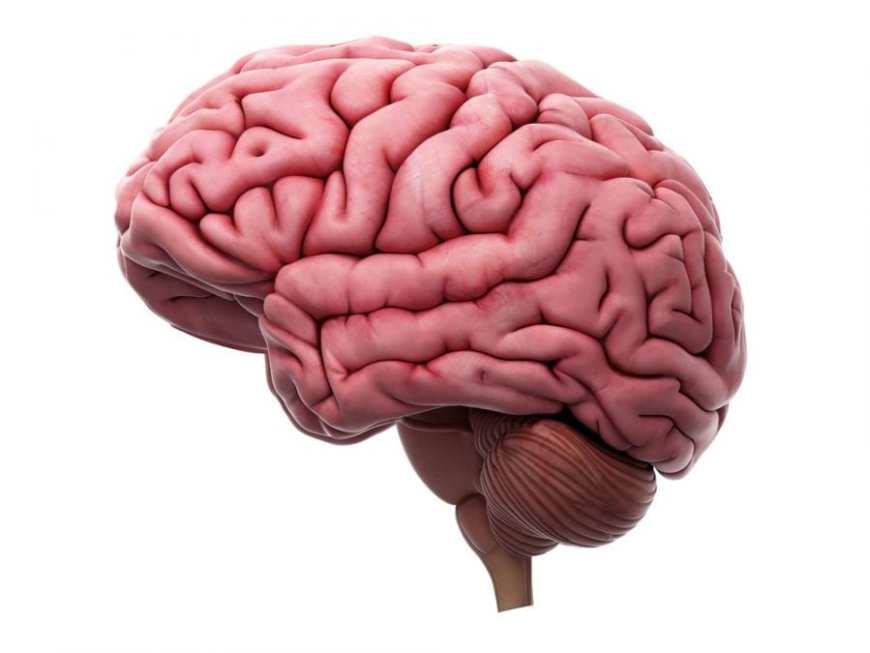Brain Image, cannabis helps neurogene process