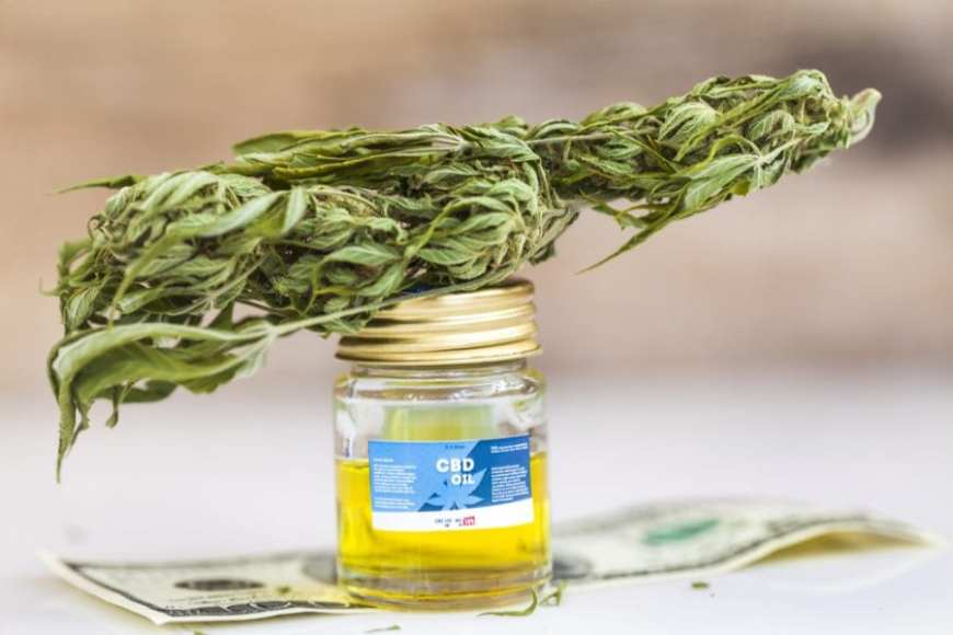 CBD Oil and Bud, cannabis helps neurogene process