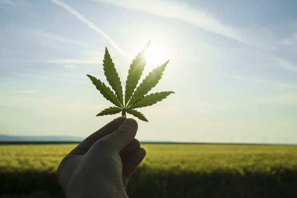 Sunsetting and hand holding a cannabis leaf up to the sky