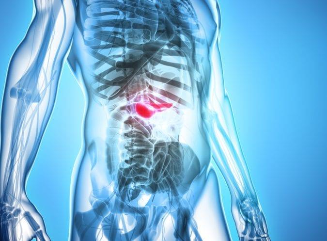 3D Image of Pancreas