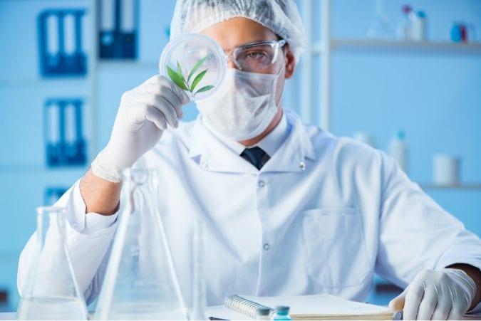 Cannabis Researcher