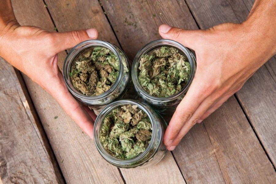 cannabis, cannabis strains, strains, buds, dispensaries, medical cannabis, recreational cannabis, mental wellness, mental health, depression, anxiety, CBD, THC
