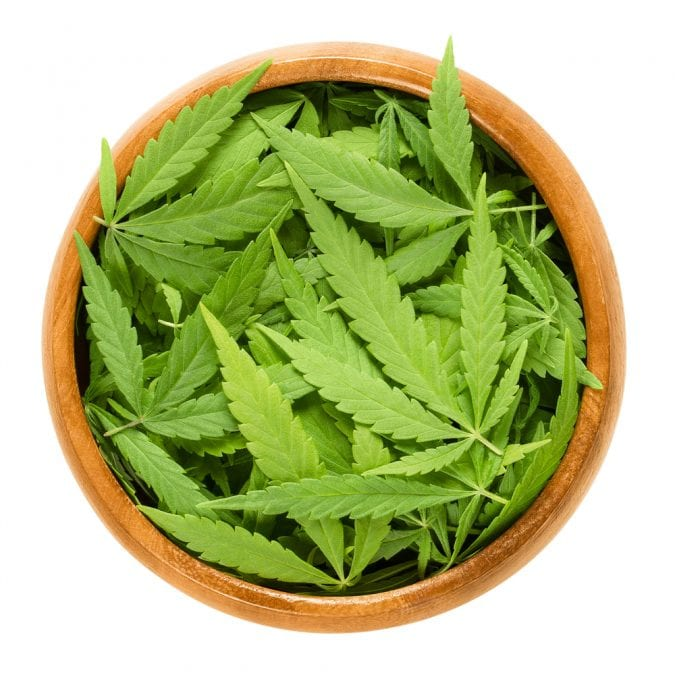 Raw Cannabis Leaves in a Bowl