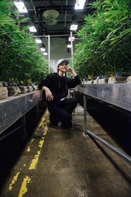 cannabis blackout day