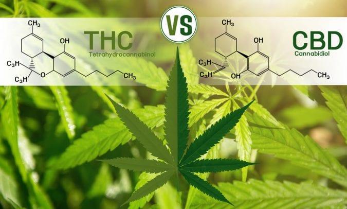 THC vs CBD Chemical formula