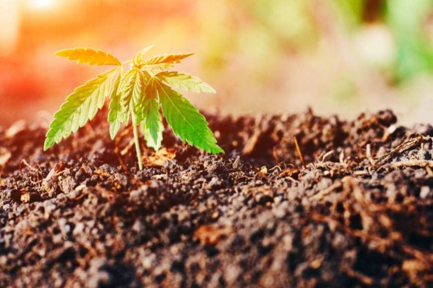 is the word marijuana racist represented by new seedling growing up out of the earth