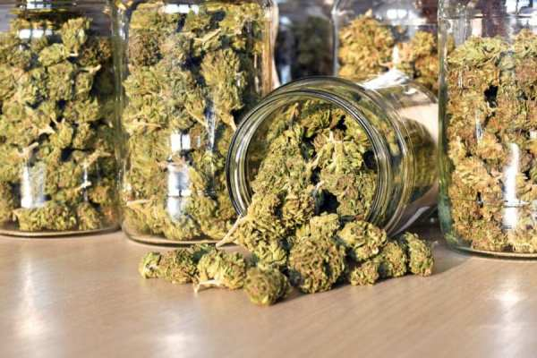 Cannabis in glass jars at a dispensary