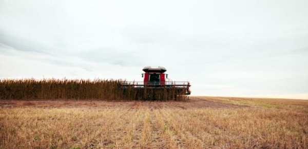 cannabis, hemp, hemp farms, industrial hemp, farm bills, USA, legalization, Canada, federal laws, agriculture