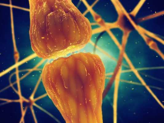 cannabis, medical cannabis, recreational cannabis, research, neurotransmitters, CB1, CB2, CB receptors, cannabinoids, endocannabinoid system, inflammation