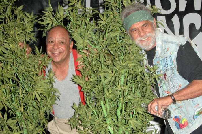 cancer research, cancer, cancer treatment, medical cannabis, cannabis, CBD, THC, chemotherapy, famous advocates, legalization, tumours, Tommy Chong