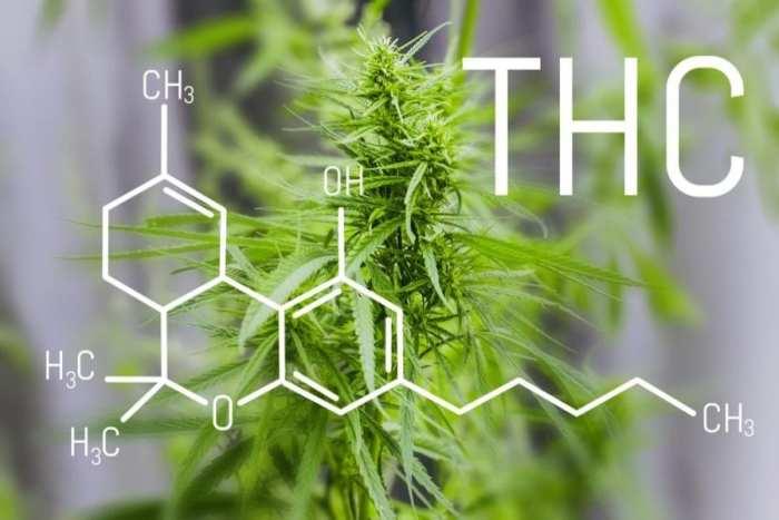 trophoblasts, placenta, anandamide, CB1, CB2, cannabis, medical cannabis, recreational cannabis, pregnancy, prenatal, CBD, THC, anandamide