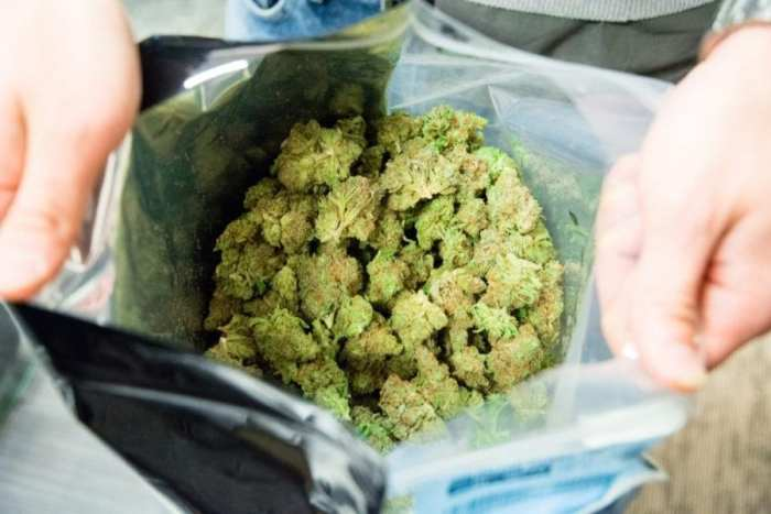 Open bag of cannabis buds taken at police raid