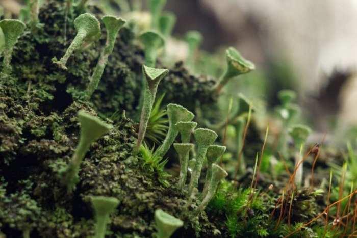 lichen in a forest