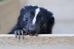skunk weed, dank, weed, cannabis, medical cannabis, strain,