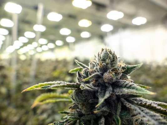 cannabis, medical cannabis, CannTrust, regulations, Canada, legalization, federal regulations, Health Canada, stock market