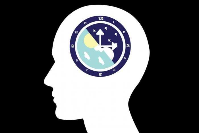circadian rhythm, aging, CB1 receptors, endocannabinoid system, 2AG, THC, cannabinoids