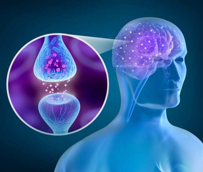 narcolepsy, cannabis, medical cannabis, recreational cannabis, orexin, endocannabinoid system, ECS, sleep disorders