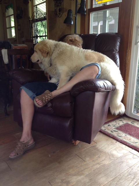 Buddy the dog in someone's lap